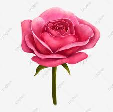 عيد الحب التوضيح صغير وردة حمراء وردة جميلة الزهور ورود الزهور