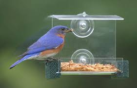 The 5 Best Bluebird Mealworm Feeders To Try 2020 Bird Watching Hq