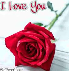 i love you photo rose لم يسبق