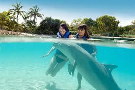 dolphin deep water adventure at sea