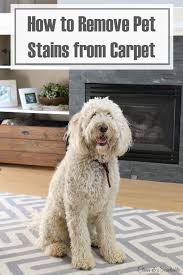 how to remove pet sns from carpet