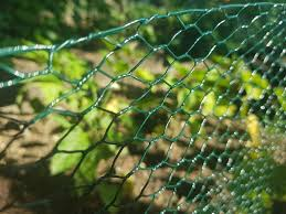 Green Pvc Wire Netting Plastic Coated Chicken Mesh 1m X 25m