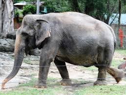 Hệ động vật Việt Nam – Wikipedia tiếng Việt