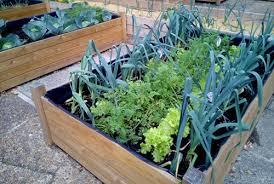 terrace gardening for beginners the