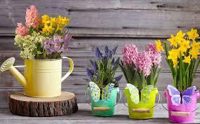 تحميل خلفيات الربيع زهور الربيع Muscari الزنابق النرجس