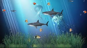 c reef aquarium animated wallpaper