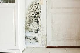 what to do if your house has mold or