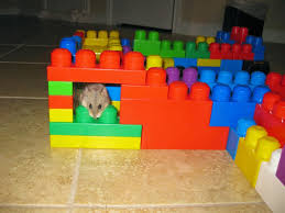 10 Fun Things To Do With Your Hamster Dwarf Hamster Blog
