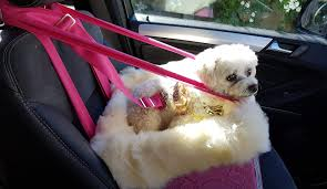 booster seat and seat belt posh dogs