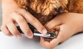 stop dog toenail bleeding