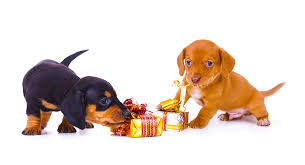 dachshund gifts unique gift ideas for