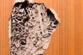 Get Termites Behind Drywall Pics