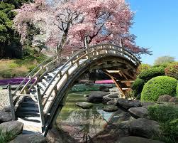 sakura garden live wallpaper apk free