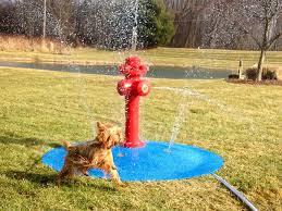 dog water park portable splash pad