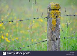 Concrete Fence Post Barbed Wire High Resolution Stock Photography And Images Alamy