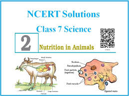ncert solutions for cbse cl 7
