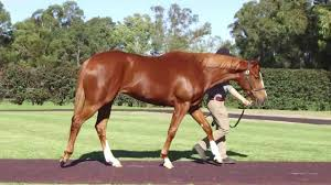 Magic Millions National Broodmare Sale ...
