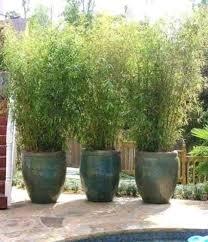 Home Jungle Flora Bamboo