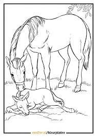 Kleurplaten Paard Met Veulen Kleurplaat