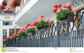 Hanging Flower Pots Stock Photo Image Of Flowers Background 45483006
