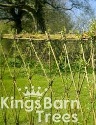 Willow Hedge Weaving Decorative Kits For Sale Uk Supplier