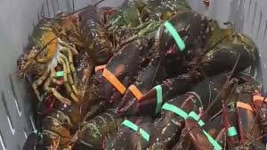 Slower lobster season means high prices ...