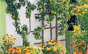 plant fruit trees to make your garden