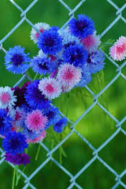beautiful flowers hd wallpapers for