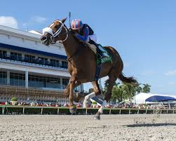 Tonalist's Shape Goes For Six In A Row At Gulfstream Park - Past The Wire