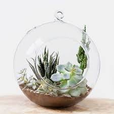 8 best terrariums and terrarium kits