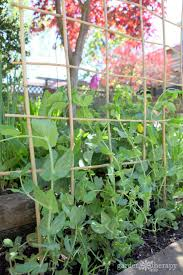 Small Space Gardening Ideas And Tips To Grow Mountains Of Vegetables
