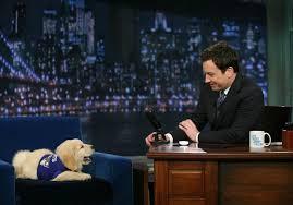 Jimmy Fallon's puppy predictor picks Super Bowl winner! - NBC News