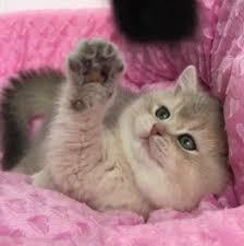 صور ورد وقطط