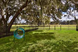 5 929 Dog Park Stock Photos Pictures Royalty Free Images Istock