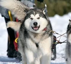 Pagosa Dogsled Tours | Fundable - Crowdfunding for Small Businesses