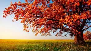 red tree pling