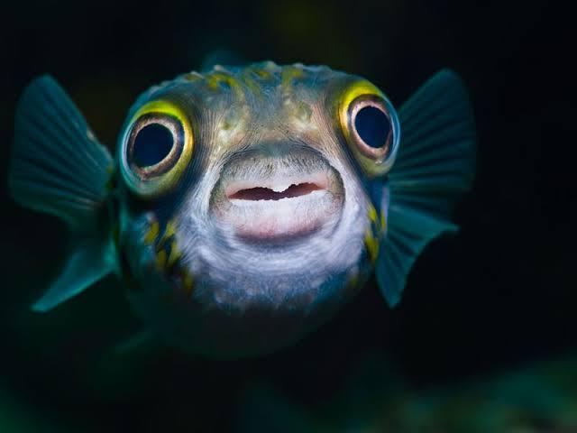 How to Raise Arowana Fish From Home