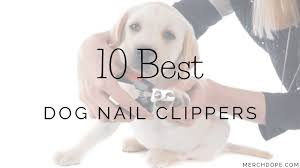 10 best dog nail clippers in 2020