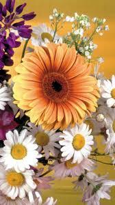 gerbera daisies wallpaper 49 images