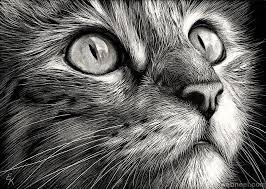 30 beautiful cat drawings best color