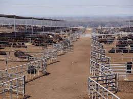 Https Www Mla Com Au Globalassets Mla Corporate Research And Development Documents Beef Cattle Feedlots Design And Construction Web2 Pdf