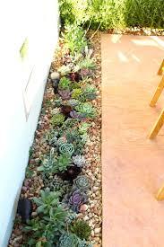 50 best succulent garden ideas for 2020