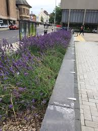 """Ada Burns on Twitter: """"Love the lavender border fragrant and colourful… """""""