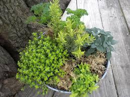 herbs home garden information center