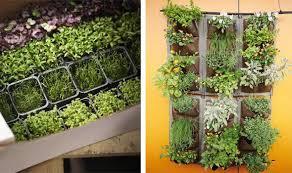alan titchmarsh tips on growing herbs