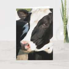 wisconsin dairy cow gifts on zazzle