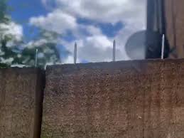 Neighbour Installs Cat Spike Nails In Fence During Decade Long Edinburgh Feud Edinburgh Live