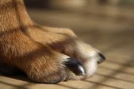 how often should you cut your dog s nails