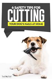 safety tips for cutting dog s nails at
