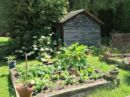 growing veg in raised beds